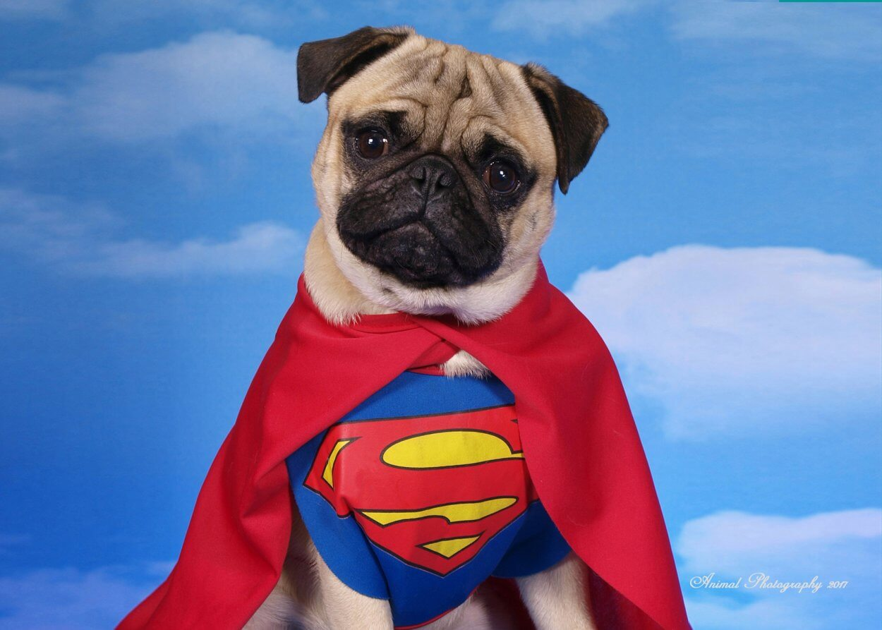 Superman Animal Photography